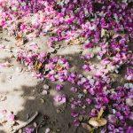 fallen bright petals on ground