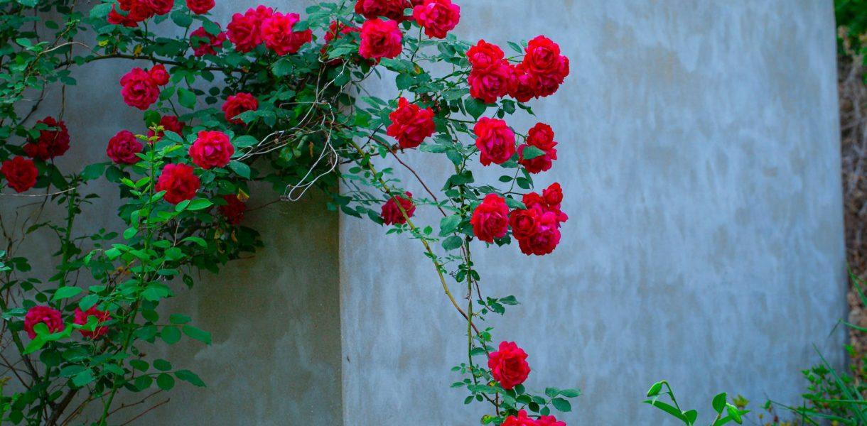 love flowers summer shrub